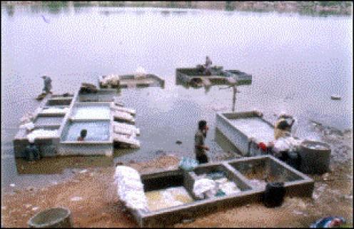 Polluted catfish farm tanks along the Mekong River.