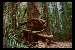 The Rainforests are the lungs of the planet.