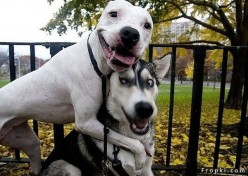Pets Who Boost Your Spirit