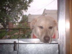 Maggie in Roswell, wanting inside