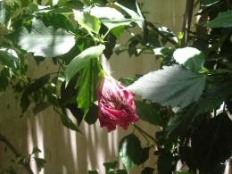 Wilted Flower = Bad Mood in Progress