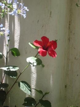 Blooming Flower = Good Mood