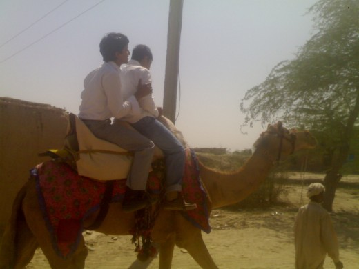"""Camels are used as basic transport in """"Rohi"""" (Picture by: Maaz)"""