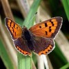 CopperButterfly profile image