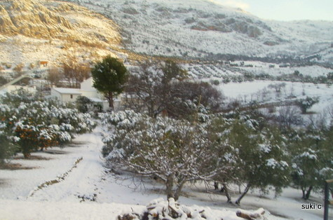 Next morning - figs, olives and orange trees