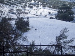 Tobogganing on the same field that the goats were happily grazing on in the photo higher up the page