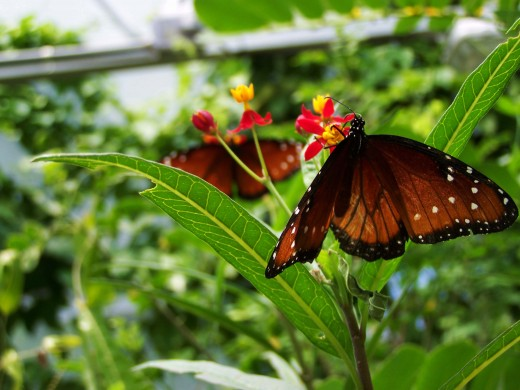 butterflies on flowers are so peaceful don't you think?
