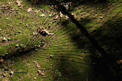 The shadow of the hammock casts a pattern on the mossy ground.