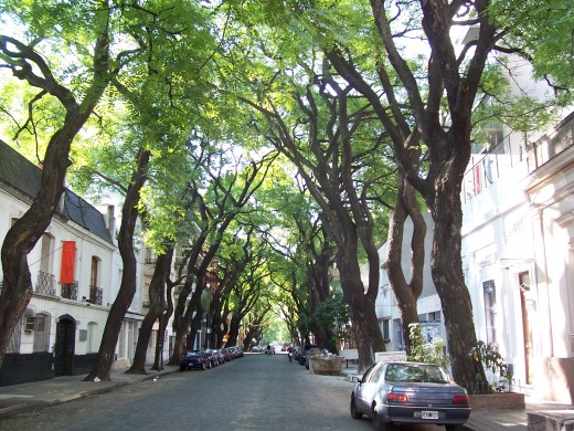 Enjoy tree-lined streets in Buenos Aires.