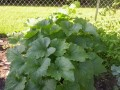 Tips for Growing Organic Vegetables