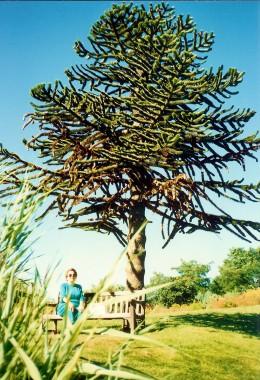 Van dusen botanical garden photos in vancouver canada natural beauty for Garden pavilion crossword clue