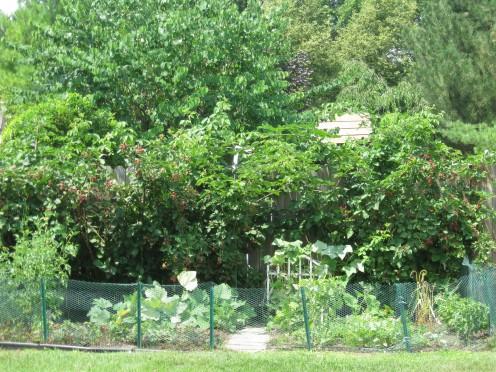 Christa's Garden-2010