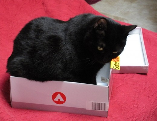 Silly Soot tries on a box.