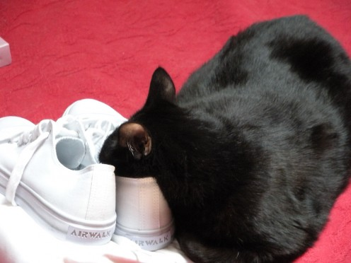Sootsie asleep with nose in shoe!