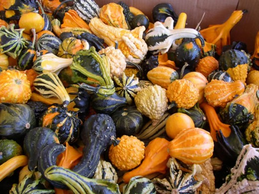 Gourds: Copyright mpproduce.com