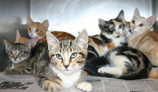 Too many kitties?