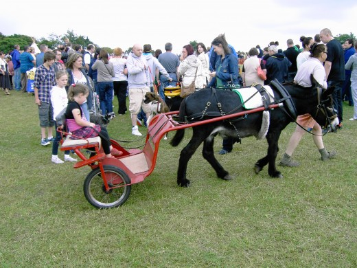 The pony and trap allows children an unusual way to get around the park. Photograph by D.A.L.