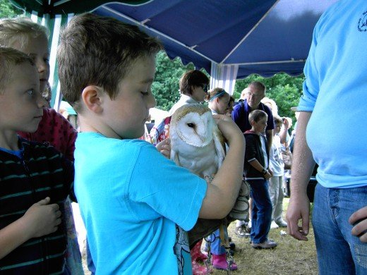 This young fellow got the opportunity to hold this barn owl.Barn Owl Bill is famous at the park. Photograph by D.A.L.