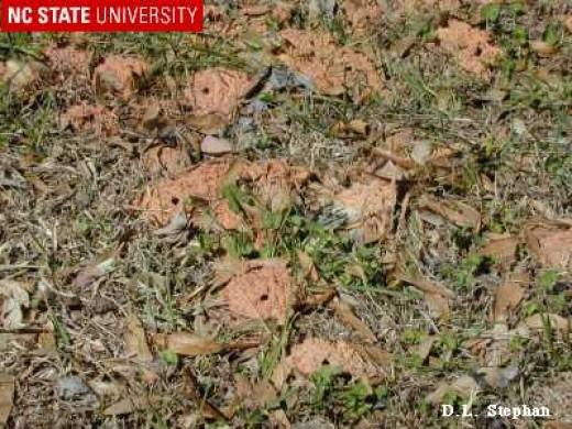 Photo Courtesy of NC State University