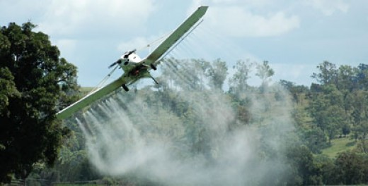 Aerial pesticide spraying is also a routine fact of life. These chemicals are harmful not just to insect pests, but migrant workers sometimes working below.