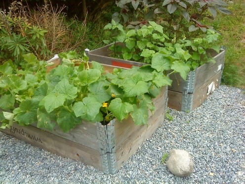 My own minimal garden!