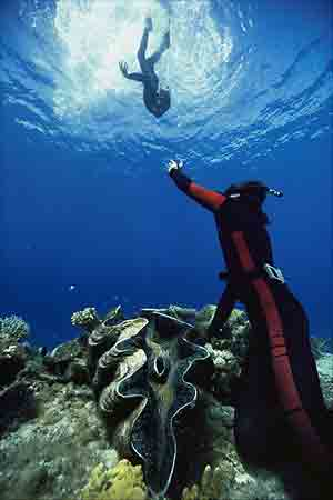 Divers in the Bikini Atoll in the Marshall Islands spot a giant clam (Tridacna gigas) anchored to a coral reef. During the day, the animal's fleshy mantle—which contains green algae—spreads over its open shell to take in sunlight. The sun feeds the a