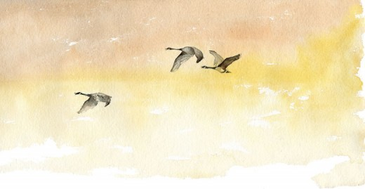 """Sunset Migration"" __by Roderick MacIver"