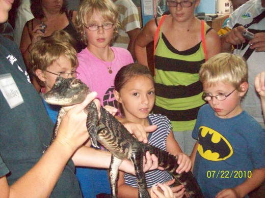 Lexi liked the alligator at the Tarpon Springs Aquarium!