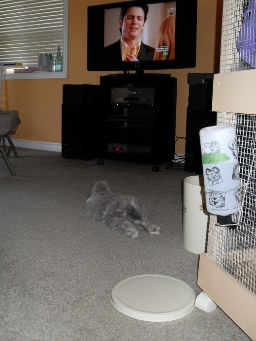 Who knew a bunny could be funny?