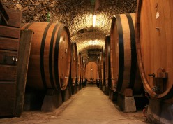A Taste of Italian Wine : Following the Mamovy Trail