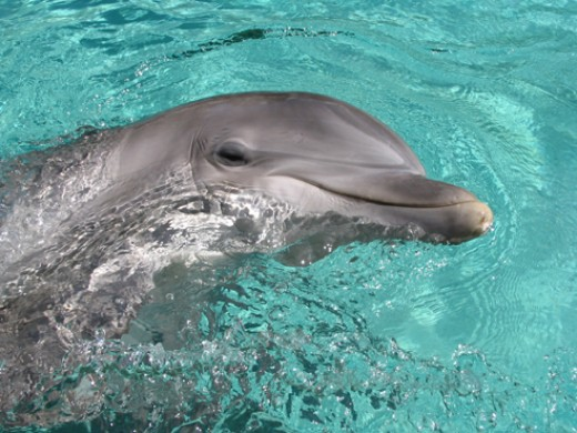 Make a new friend at the Clearwater Aquarium.