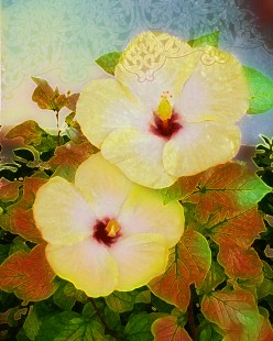 Yellow Hibiscus State Flower of Hawaii