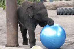 Baby elephants first birthday!