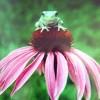foggyfrog profile image