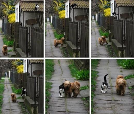 Cat & Dogs