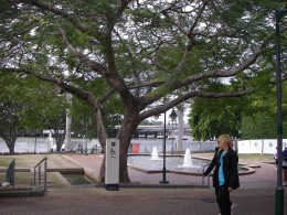 Old trees, lamps and a water fountain in Southbank