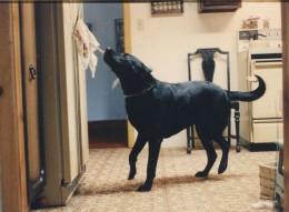Duke opens the door