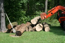 How to make lumber from your woodlot for use in your home