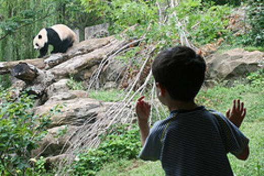 Take them to the zoo! Image courtesy of woodleywonderworks on Creative Commons.