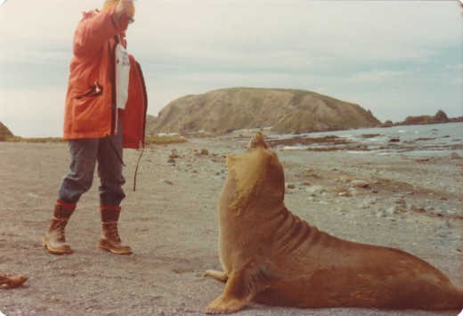 MacQuarie Island.  My freind and fellow expeditioner, Plumber, Col Watson getting a reaction from a young elephant seal