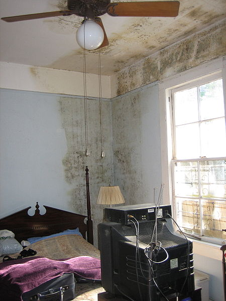 Wall with molds after water flooded in the house. Image credit: Infrogmation, Wikimedia commons