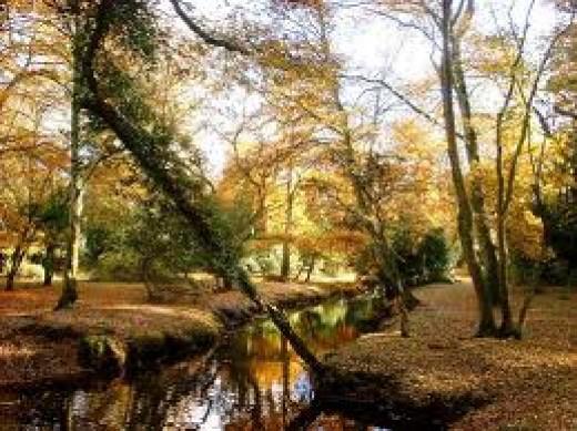 Woods....
