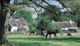 ..ponies...and houses
