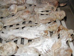 A more recent genocide where the death of one group was fated by another occurred in Rwanda. Genocide appears to be part of the human condition, something that differs from the animal kingdom.