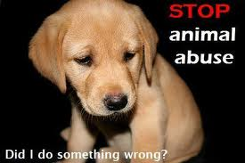 Please do what you can to help stop animal abuse.