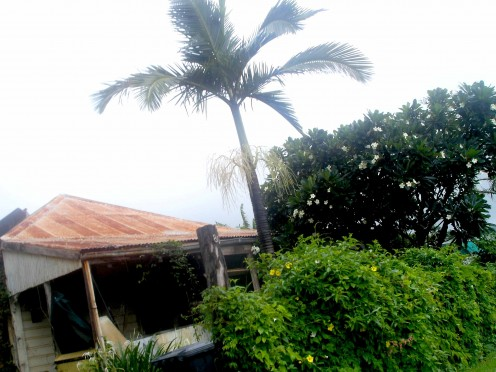 Palms, Frangipani and rusty iron roof - Cooktown Tropical idyll (during a lull in the monsoon)