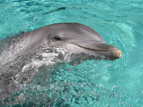 Meet a dolphin on a Destin vacation day cruise.