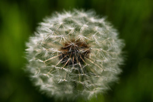 allergies can be caused by many different substances