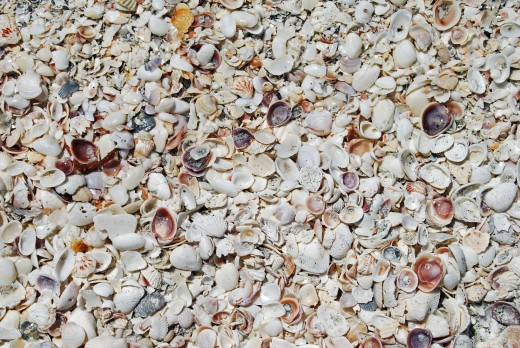 Get out early to find the best shells, but there is always an overabundance for everybody.