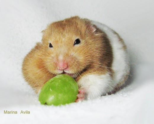 http://www.flickr.com/photos/marinaavila/2763843236/